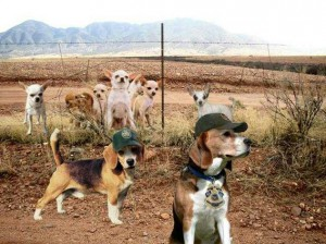 dog-border-patrol-smallx